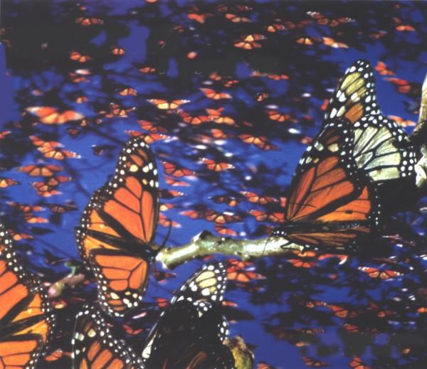 butterflies flying away